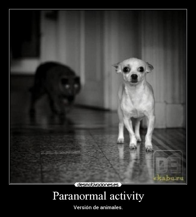 carteles paranormal activity desmotivaciones