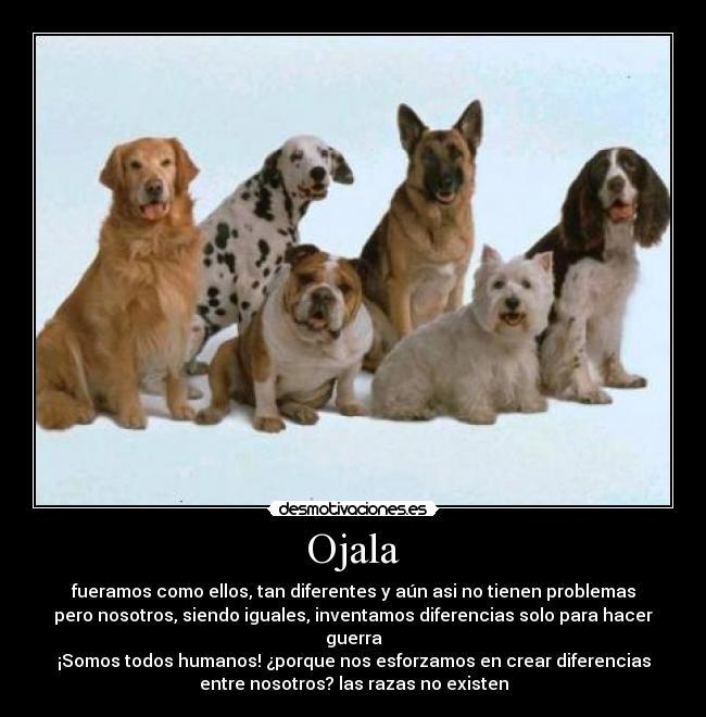 Animales con frases graciosas - Imagui
