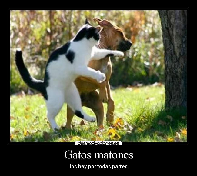 carteles gatos gatos matones desmotivaciones