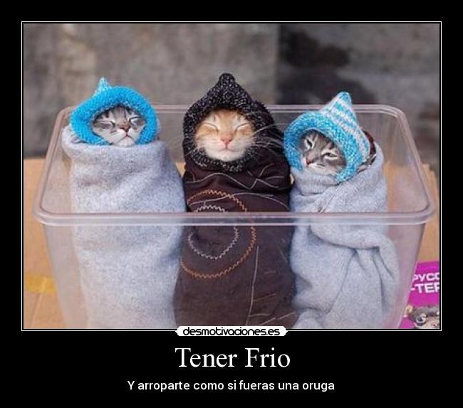 carteles frio gatos arropado desmotivaciones