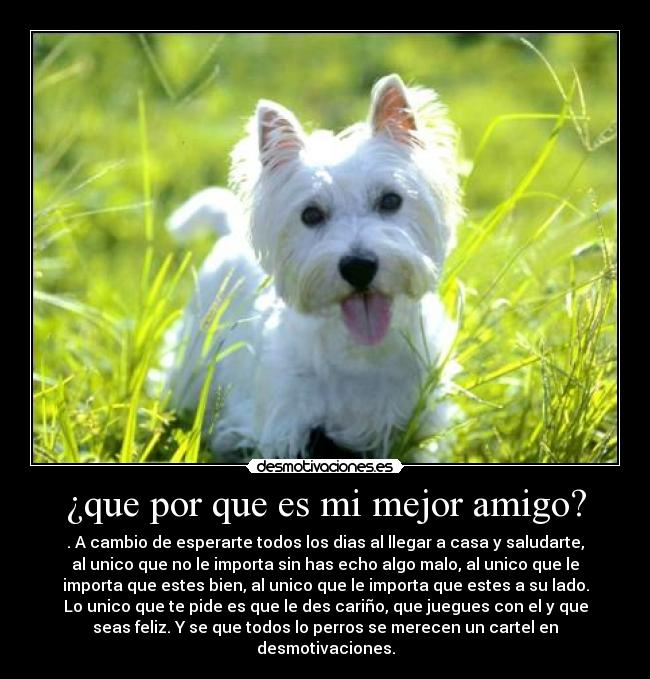 carteles perro mejor amigo mayoria vosotros desmotivaciones