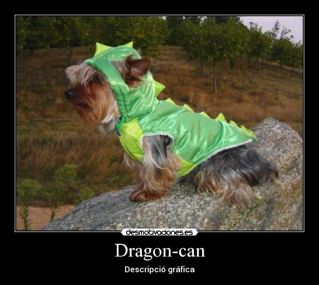 Dragon-can - Descripció gráfica