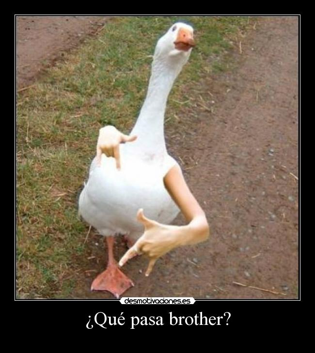 ¿Qué pasa brother? -