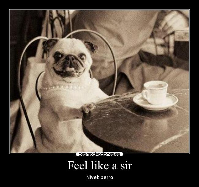 Feel like a sir - Nivel: perro