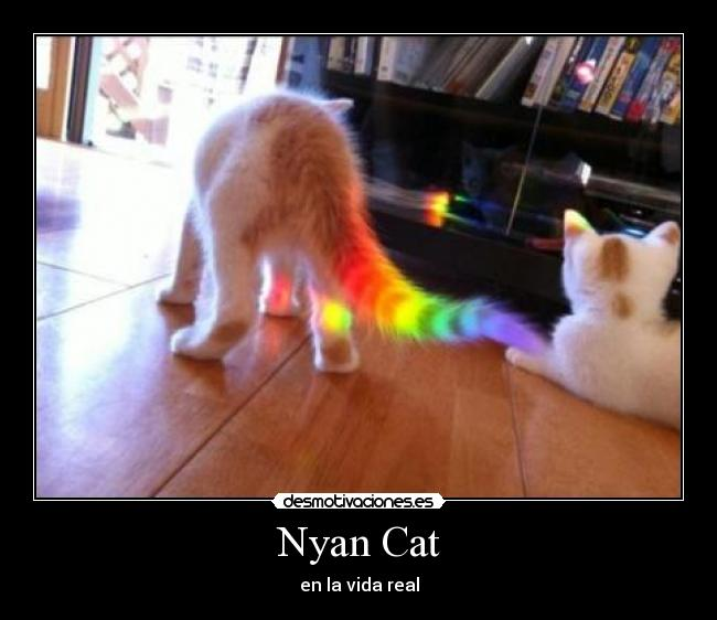 Nyan Cat - en la vida real
