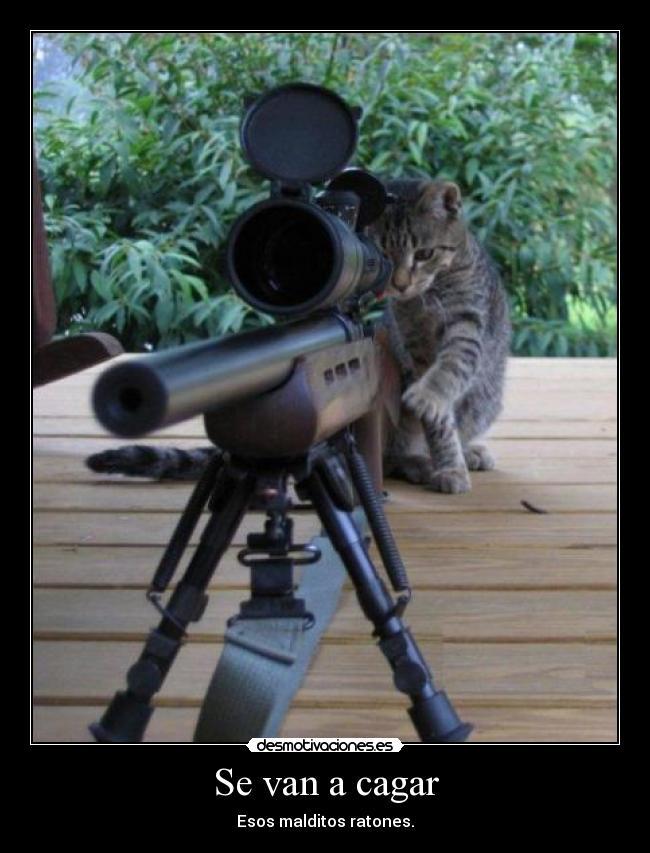carteles gatossilvestre cansado perseguir ratones desmotivaciones