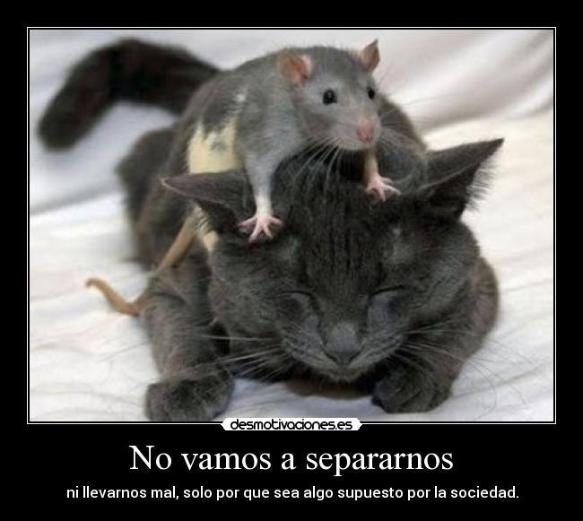No vamos a separarnos desmotivaciones - Como cazar un raton en un piso ...