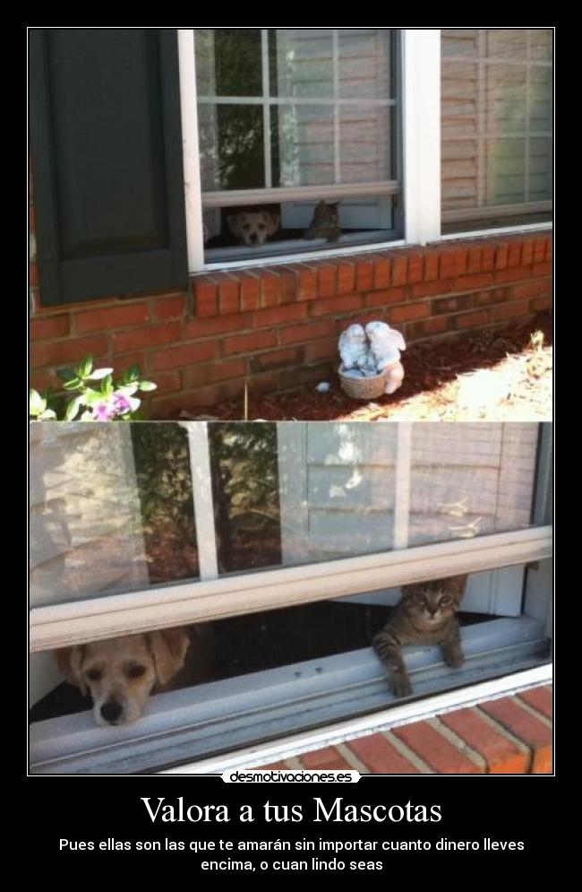 Valora a tus Mascotas carteles Mascotas Valorar Gato Perro Amar Dinero Lindo desmotivaciones