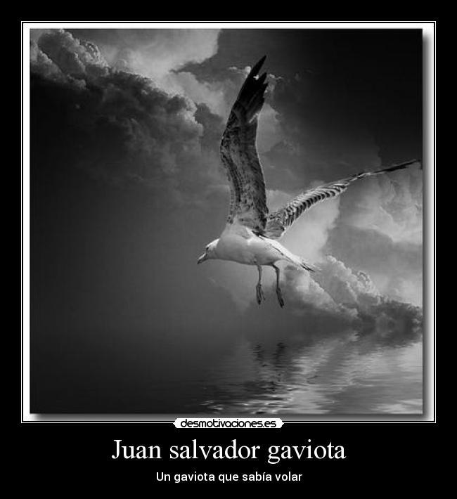 Juan Salvador Gaviota Desmotivaciones