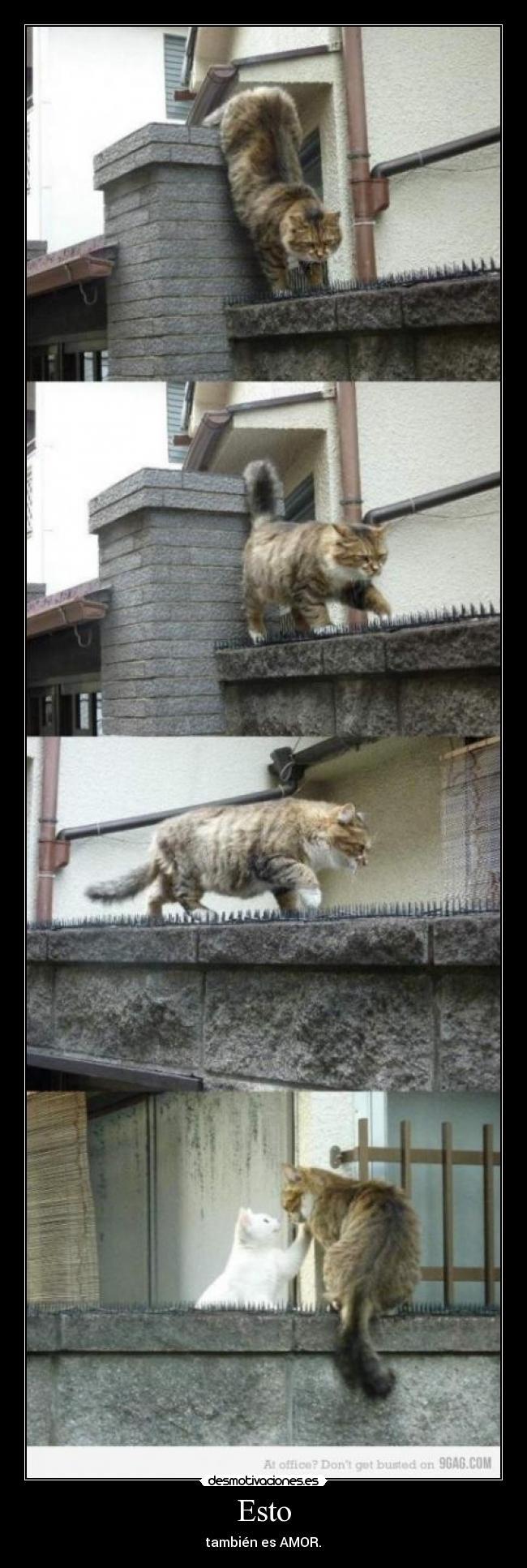 carteles gatos amor desmotivaciones