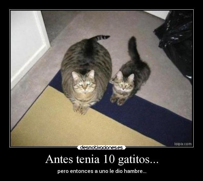 Antes-tenia-10-gatitos...