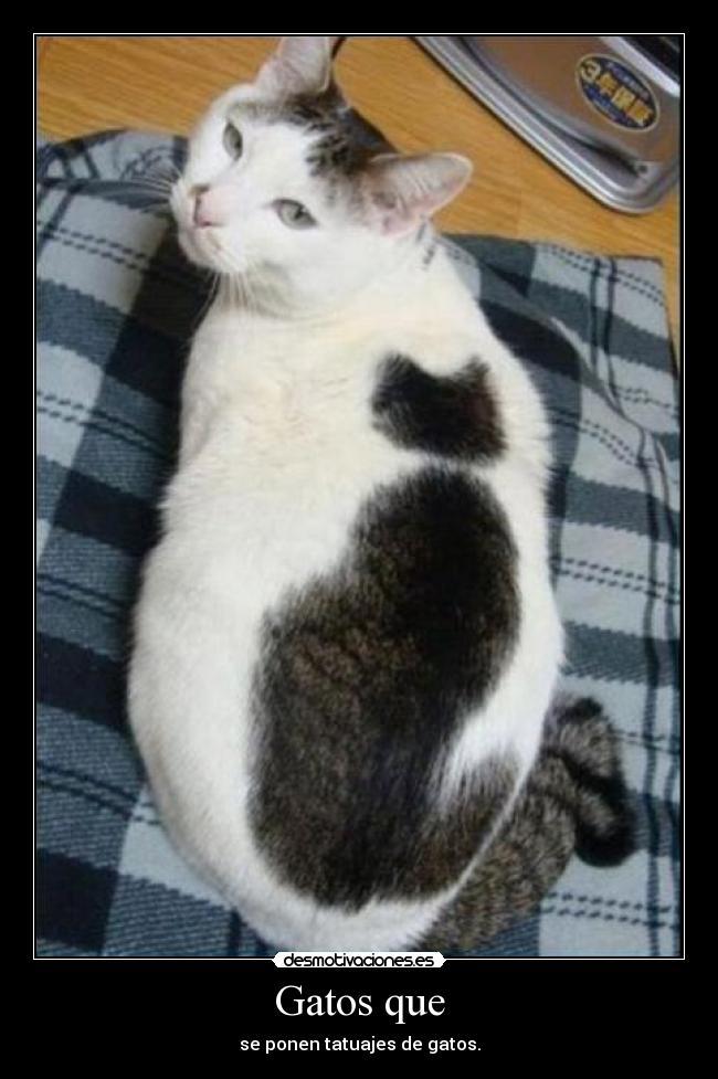 carteles gatos gatos tatuajes desmotivaciones