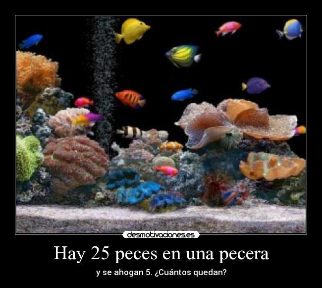 Hay 25 peces en una pecera desmotivaciones for Peces de pecera