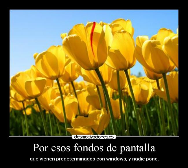 carteles tulipanes fondos aburres tanto que lees hasta las etiquetas desmotivaciones