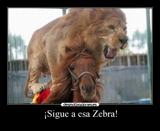 ¡Sigue a esa Zebra! -