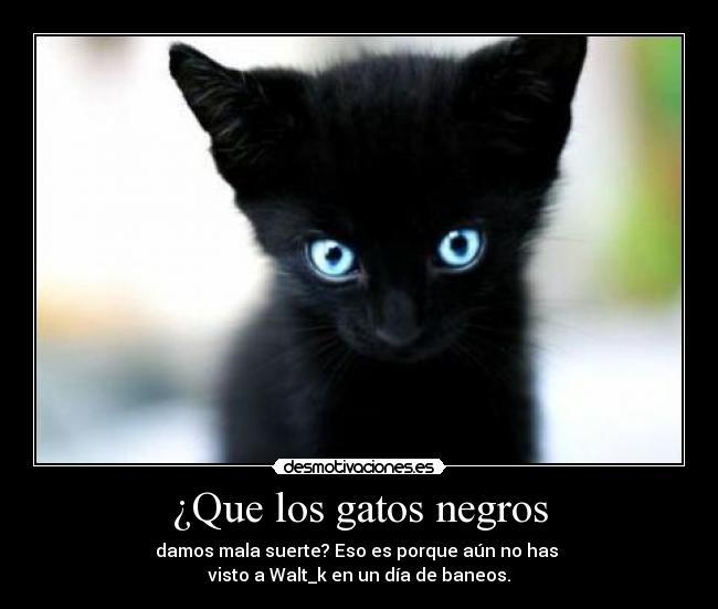 Que los gatos negros