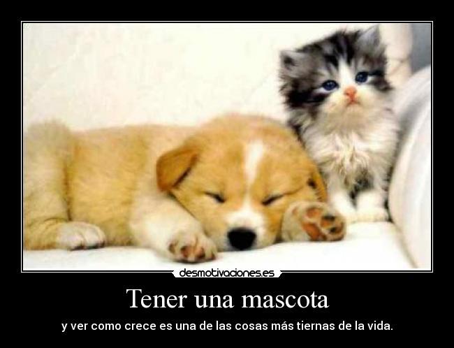 carteles mascotas tiernas fieles animales compania familia perros gatos amistad desmotivaciones