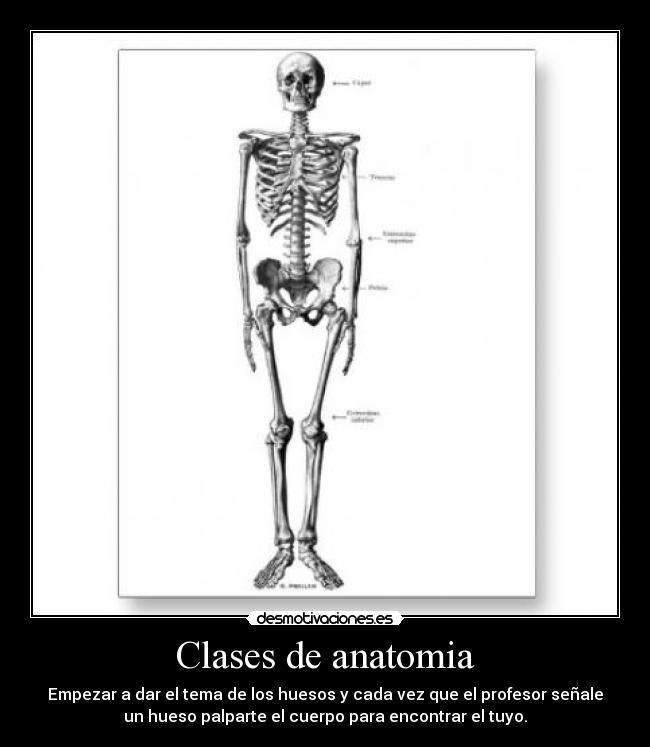 Clases de anatomia | Desmotivaciones
