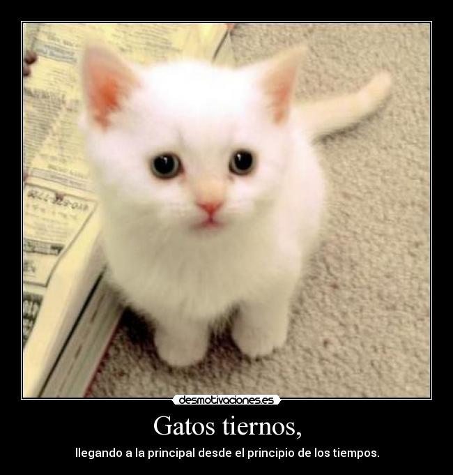 Imagenes De Gatos Con Frases