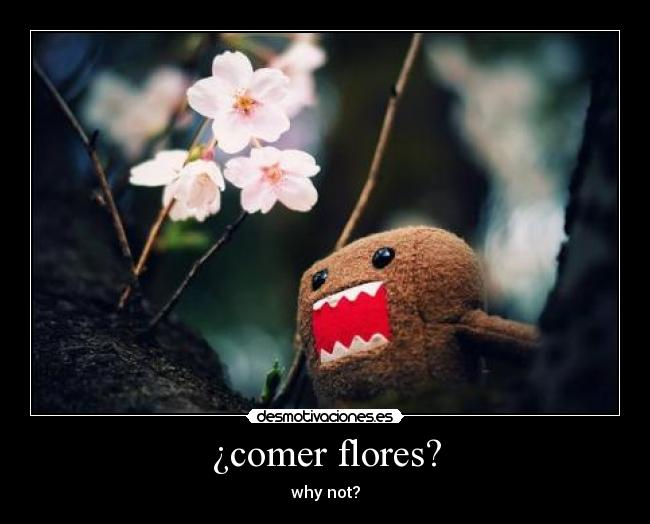 ¿comer flores? - why not?