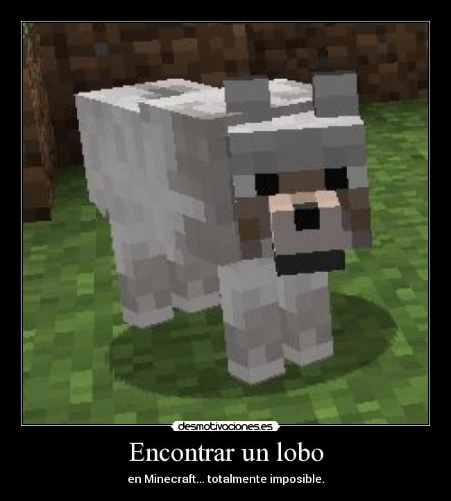 Encontrar un lobo - en Minecraft... totalmente imposible.