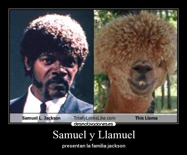 dog-totally-looks-like-jules-samuel-l-jackson
