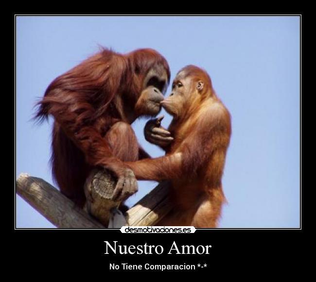 Imagenes De Amor De Monos Imagui
