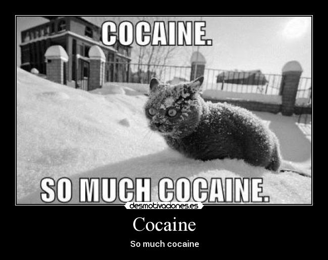 Cocaine - So much cocaine