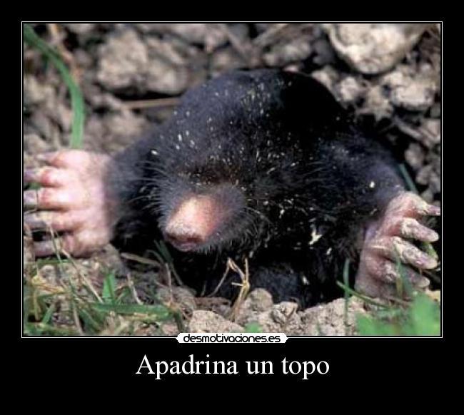 http://img.desmotivaciones.es/201111/Topo34.jpg