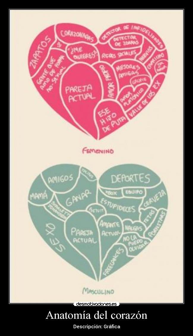 Anatomía del corazón | Desmotivaciones