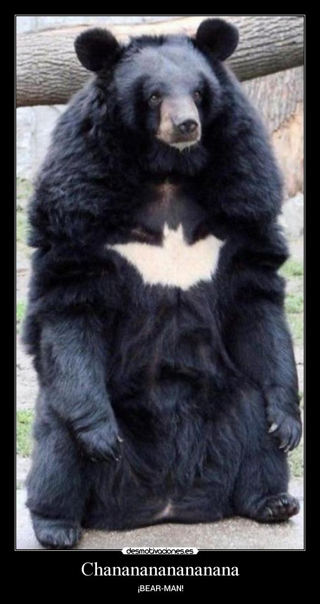 Chananananananana - ¡BEAR-MAN!