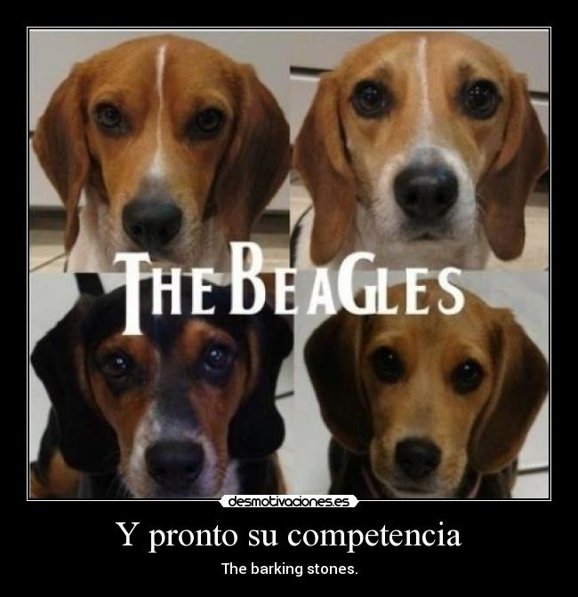 Y pronto su competencia - The barking stones.
