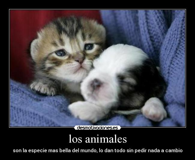 carteles animales peritos gatitos lindo aww tirerno xddd etc nose emmm antireggaeton sea desmotivaciones