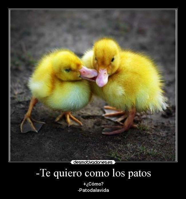 Patos tiernos animados - Imagui
