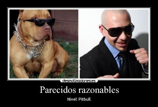 Parecidos razonables - Nivel: Pitbull.