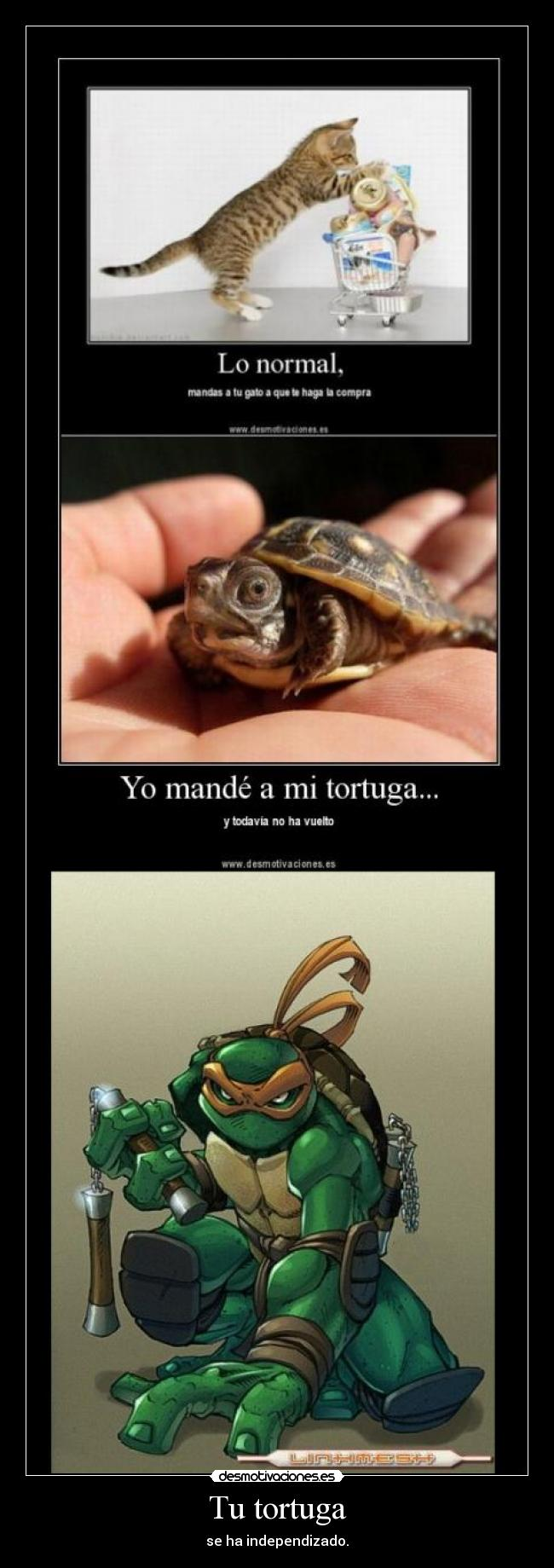 Tu tortuga - se ha independizado.