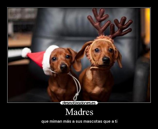 carteles madres mascotas desmotivaciones