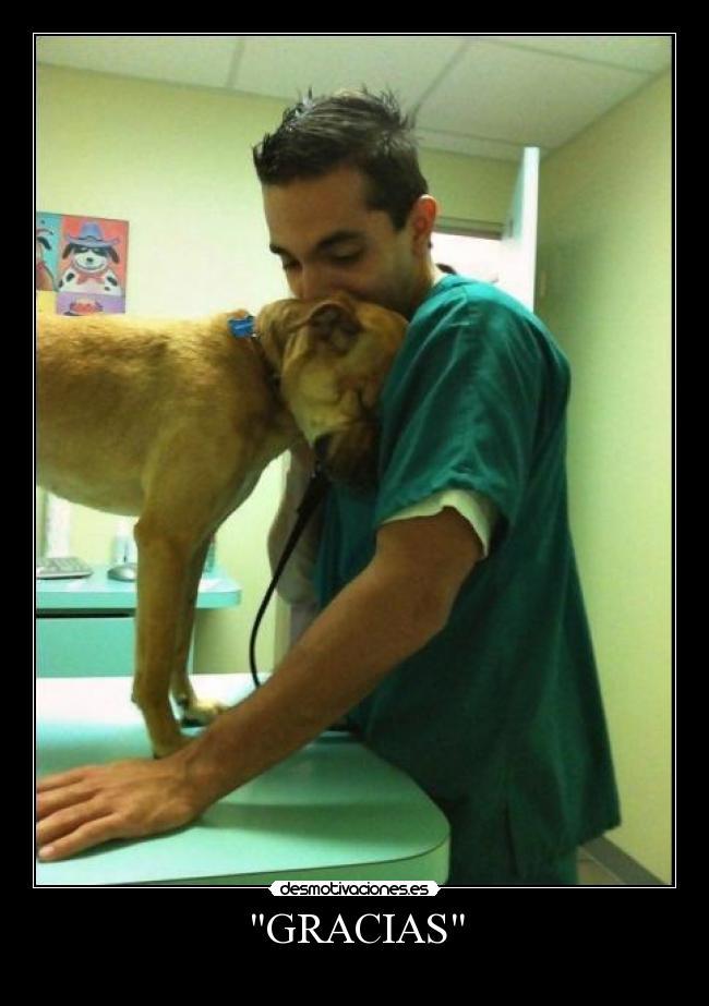 Resultado de imagen para amor veterinaria