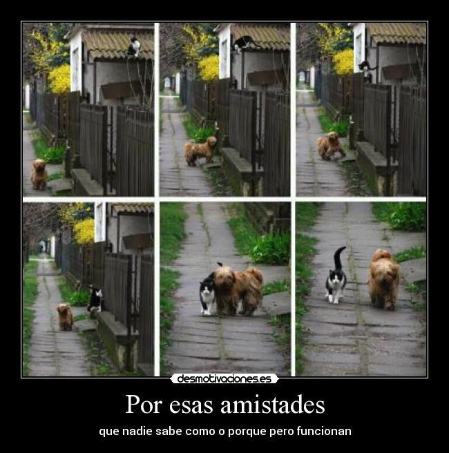carteles amistad amigos perros gatos felicidad calarat desmotivaciones