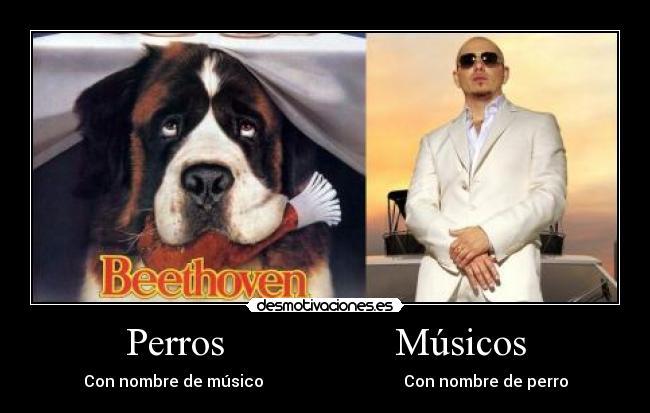 Perros-Musicos