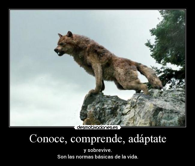 Frases Con Imagenes De Lobos