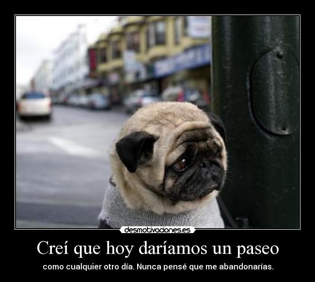 Desmotivaciones de perros abandonados  Taringa