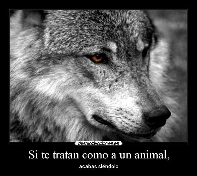 Carteles de Lobo Pag. 14 | Desmotivaciones