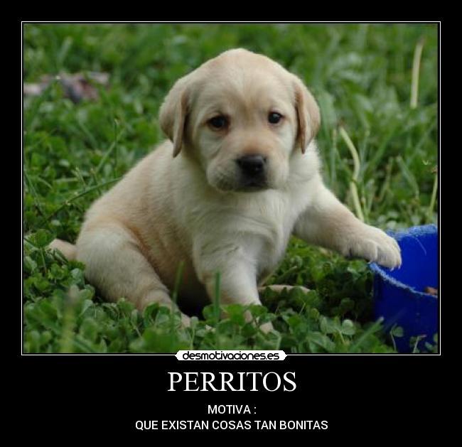 99 DIBUJOS DE PERROS ® Bonitos perros y perritos para colorear