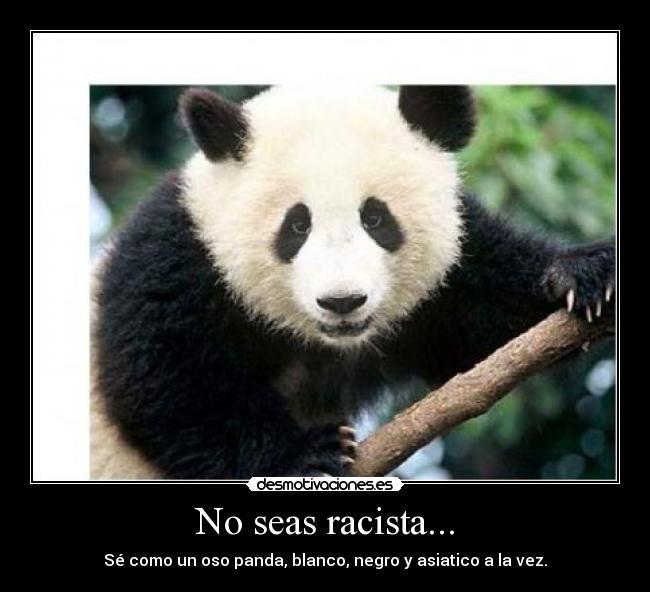 Panda meme how about no - photo#10