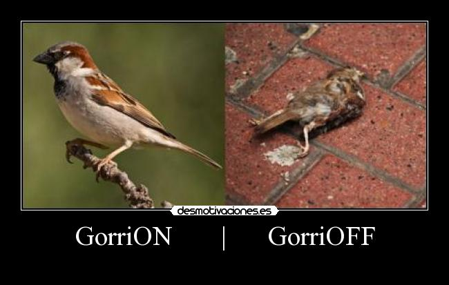 GorriON-GorriOFF