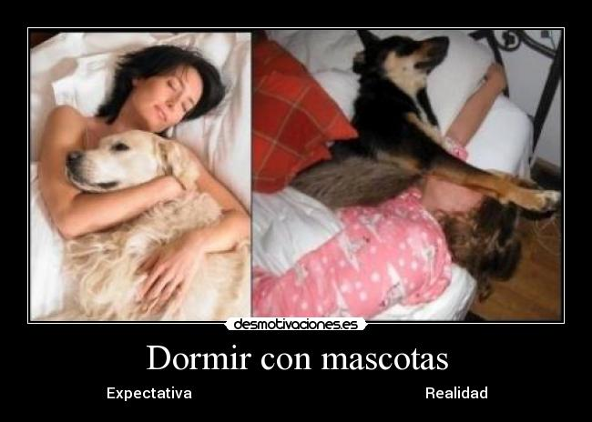 carteles dormir mascotas desmotivaciones