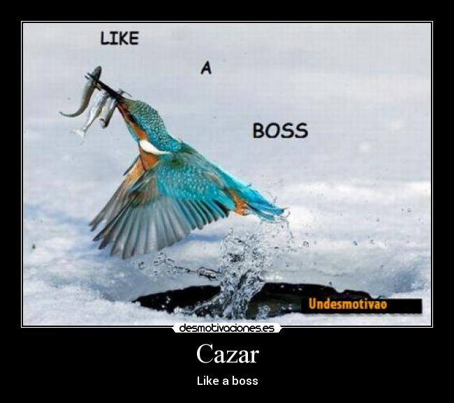 Cazar - Like a boss