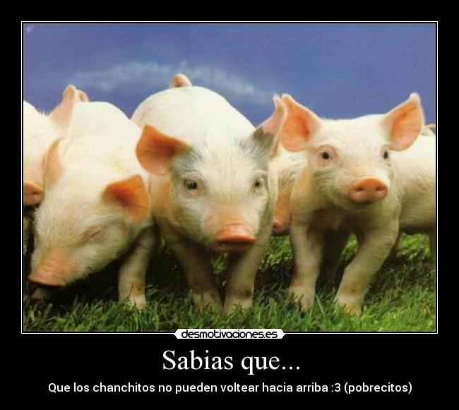 Carteles de Chanchitos | Desmotivaciones