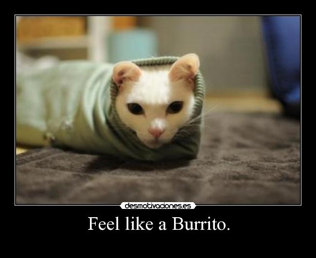 Feel like a Burrito. -